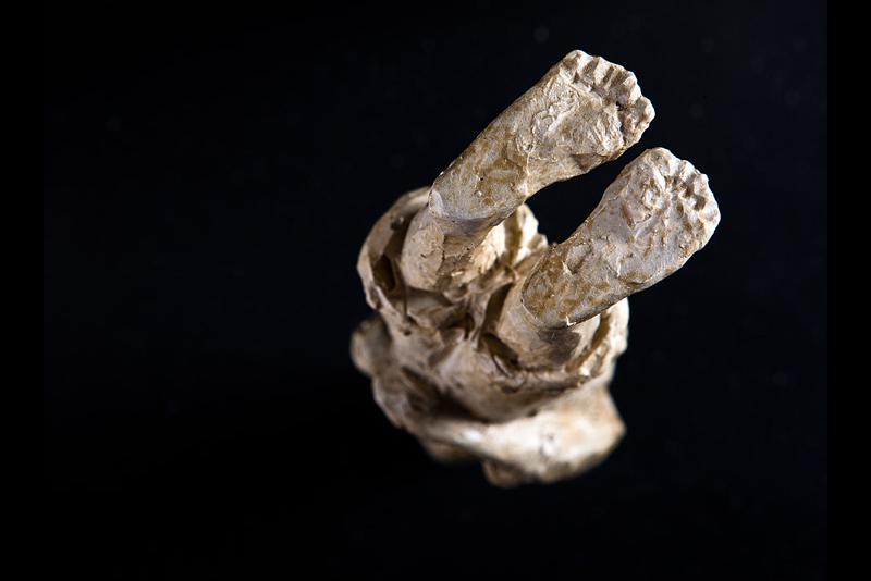 MABE - Dentro la Materia - Lusso Artigiano